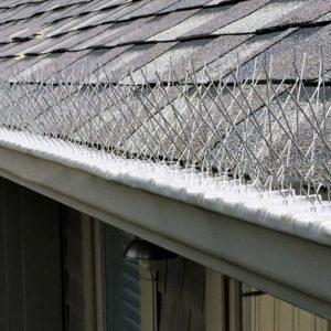 pest bird deterrent spike system