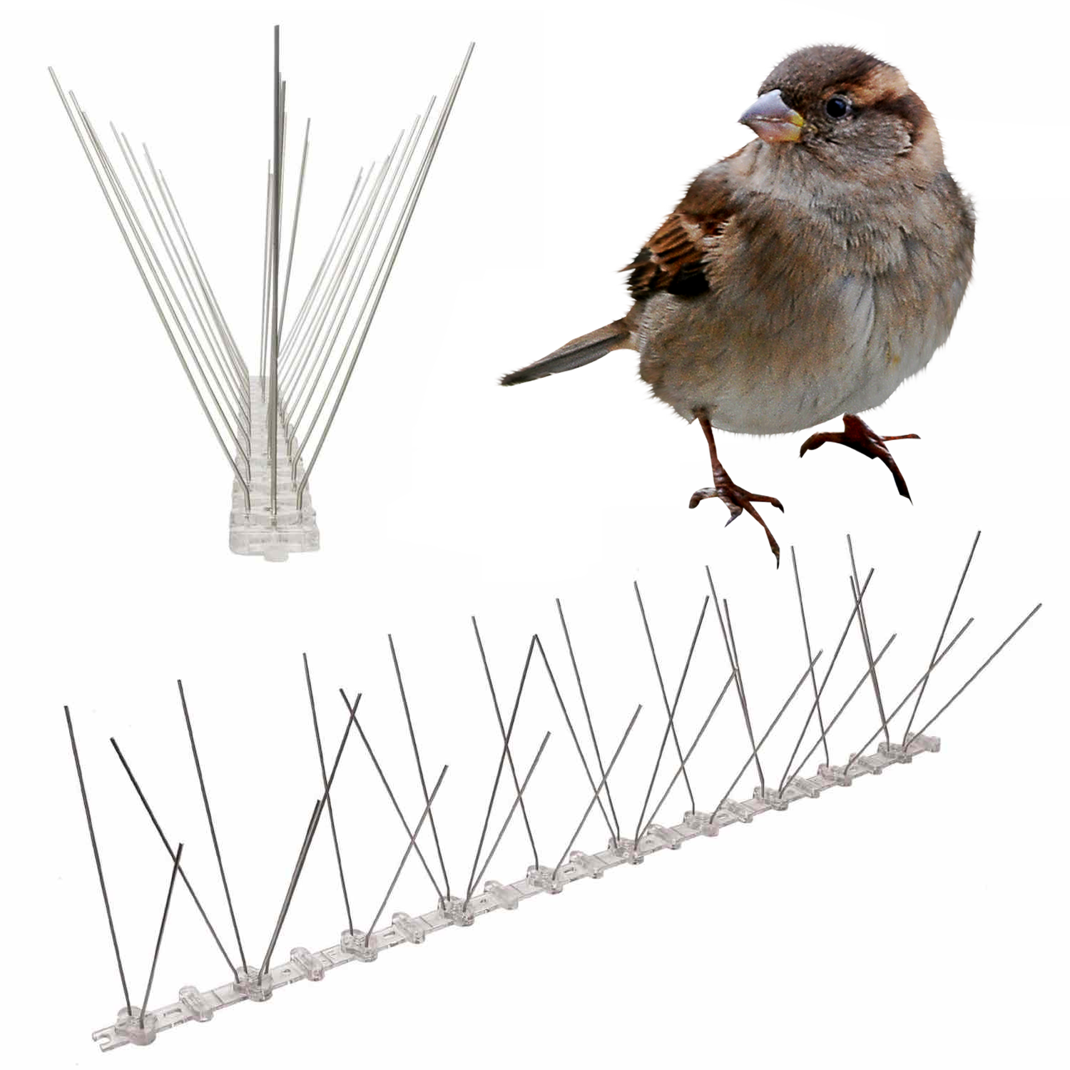 spikes to stop sparrows